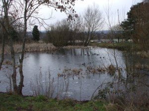 Fairwater Park Pond